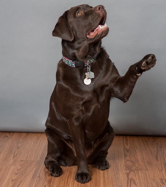 Dog-Molly